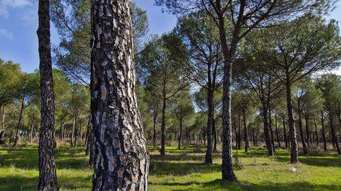¿Necesita España más árboles? Cómo ayudar a la reforestación enviando paquetes