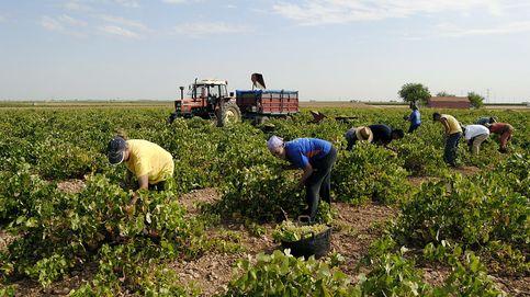 Guerra total en el vino de Valdepeñas: Nueve de cada diez botellas son un fraude