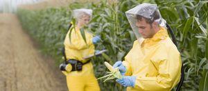"""Foto: El trigo, ese """"veneno cotidiano"""" que arruina nuestra salud"""