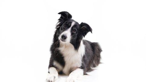Estas son las razas de perro más buscadas del mundo