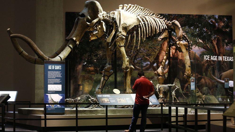 Foto: Un hombre mira el esqueleto de un mamut en una imagen de archivo. (EFE)