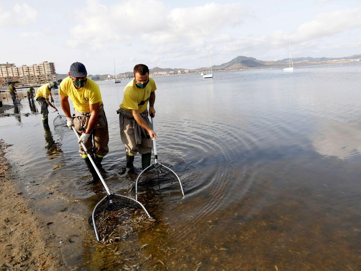 Foto: Retirada de peces muertos en el Mar Menor. (Reuters)