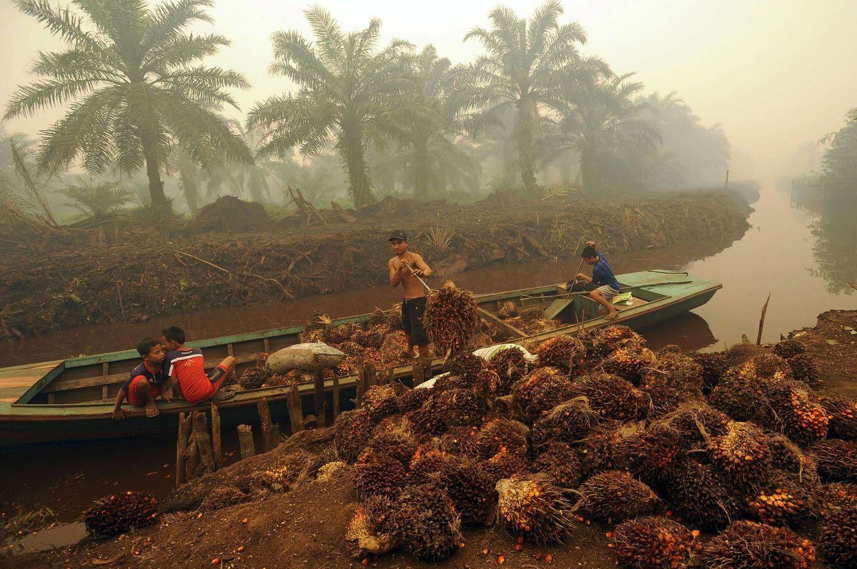 Foto: Trabajadores descargan frutos en una plantación de aceite de palma en Sumatra (Reuters)