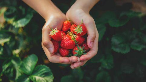 Cuándo es el momento perfecto para tomar fruta