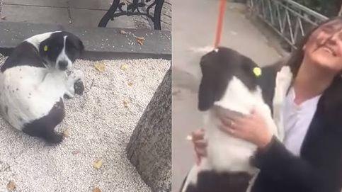La reacción de un perro perdido durante 3 años al encontrar de nuevo a su familia
