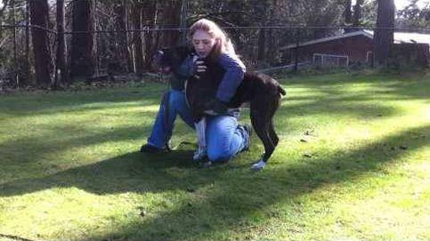 Pasos que debes seguir para salvar a tu perro si se le para el corazón