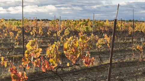 La sequía da la puntilla a los viñedos españoles, azotados por las heladas