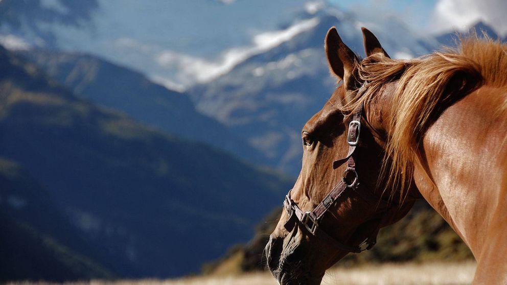 Por qué el caballo es el animal más importante de la historia