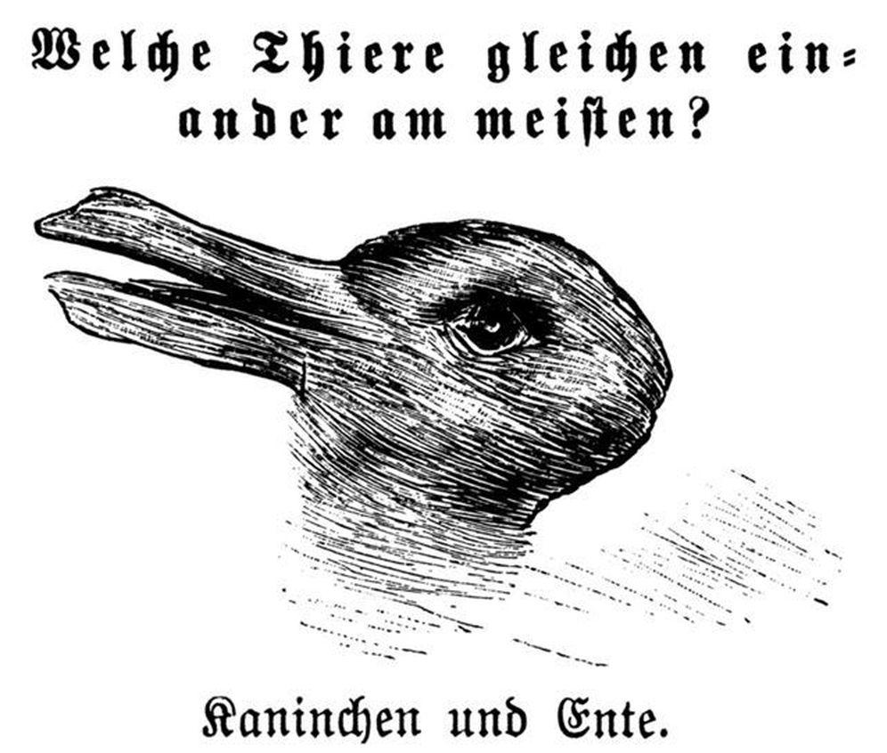 Foto: ¿Y tú, ves un pato o un conejo?
