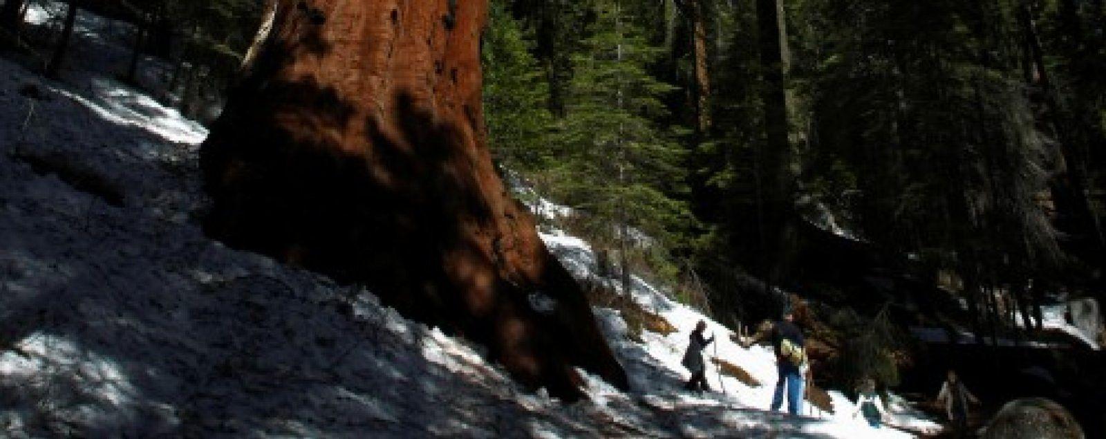 Foto: Sequoia, el fondo que revolucionó la historia de las tecnológicas llega a su 40 aniversario