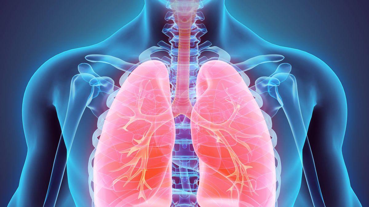 Alimentos: Cuáles son los mejores alimentos para proteger nuestros pulmones