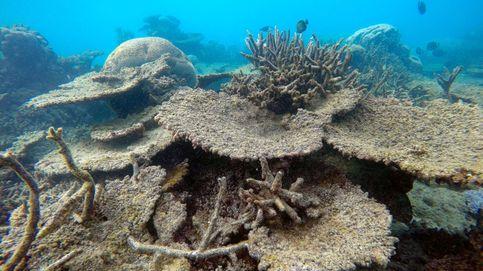 Los arrecifes de coral podrían desaparecer para siempre a mitad de siglo