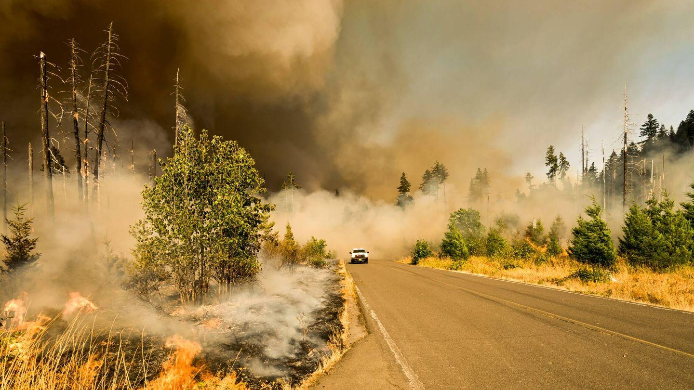 Los incendios forestales cada vez más frecuentes son reflejo de la crisis climática. (Unsplash)