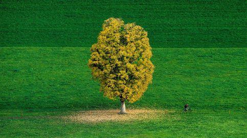 Convertirse en un árbol como alternativa a ser enterrado