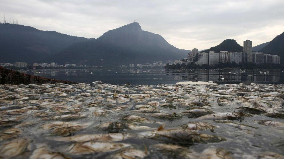 Foto: Peces muertos flotando en la laguna Rodrigo de Freitas en Río de Janeiro, donde se realizarán competiciones de remo y piragüismo de los Juegos 2016