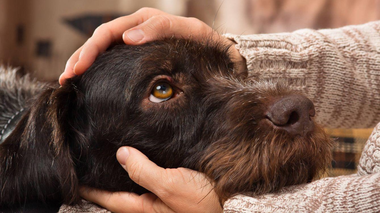 Los perros nos ven de manera diferente a como les vemos nosotros
