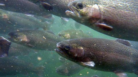 Un tercio de las poblaciones de peces de agua dulce está en riesgo de extinción