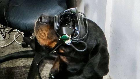 Los perros de la Armada de EEUU usarán gafas de realidad aumentada