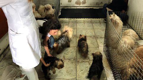 Una mujer es sancionada por tener 13 perros en condiciones lamentables e