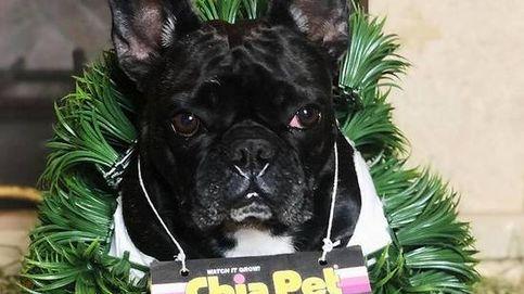 Lady Gaga ofrece 500.000 dólares por la devolución de sus dos perros robados