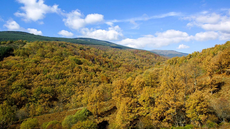 El Hayedo de Montejo de la Sierra, muy cerca de La Hiruela (Fuente: iStock)