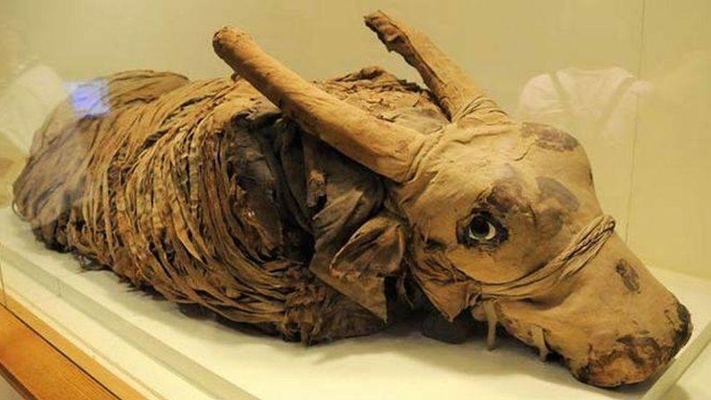 Foto: Las momias animales egipcias están vacías (Hispania Nostra)