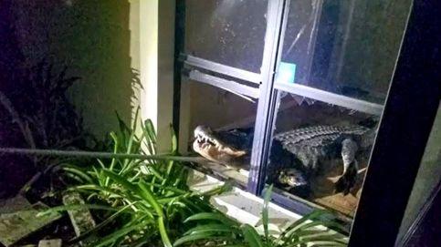 El susto de esta vecina de Florida: Hay un cocodrilo gigante en mi cocina