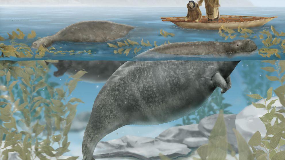 Rinocerontes, leones y focas: animales que se extinguieron por culpa del hombre