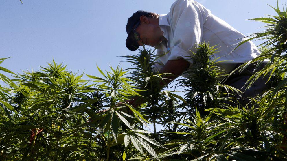 Fumar marihuana en la adolescencia provoca depresión siendo adulto
