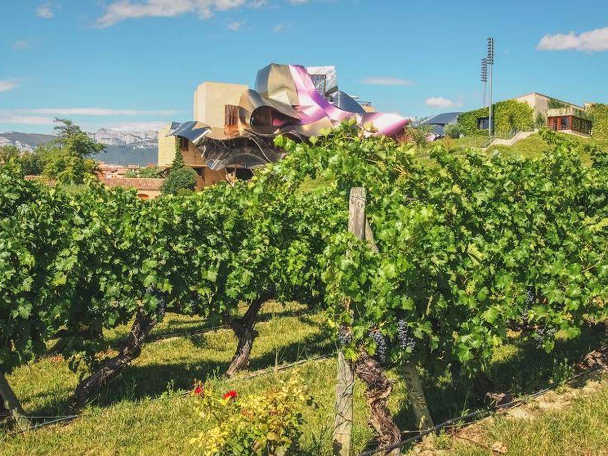 Foto: Viñedo de Marqués de Riscal con el hotel construido por Frank Gehry al fondo.