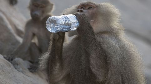 Todos tenemos sed