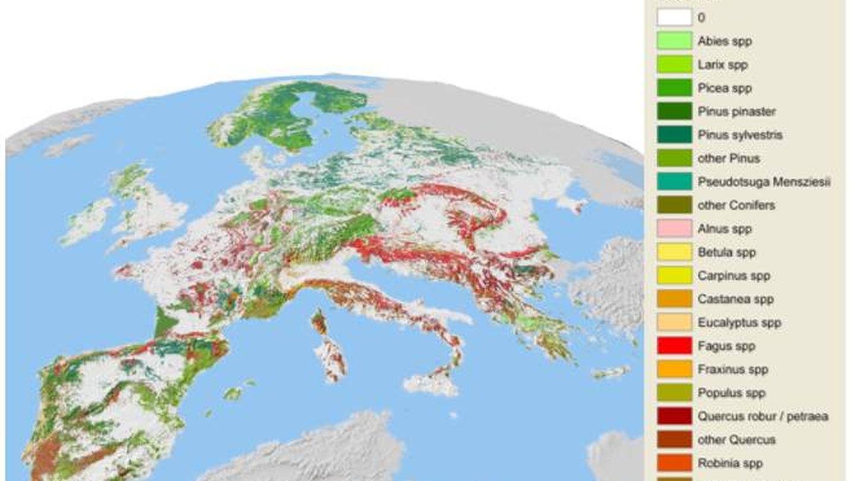 Las plantaciones más abundantes de eucalipto y pino marítimo se encuentran en la Península Ibérica (EFI)