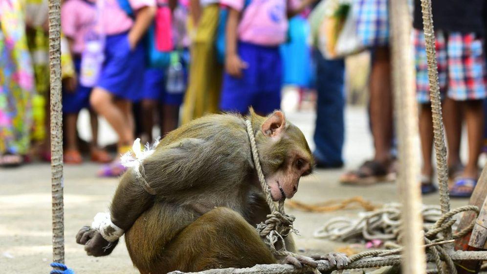 Foto: El macaco fue sometido a una humillación pública. (Mumbai Mirror)