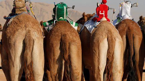 Las carreras más extrañas del mundo: robots a lomos de camellos