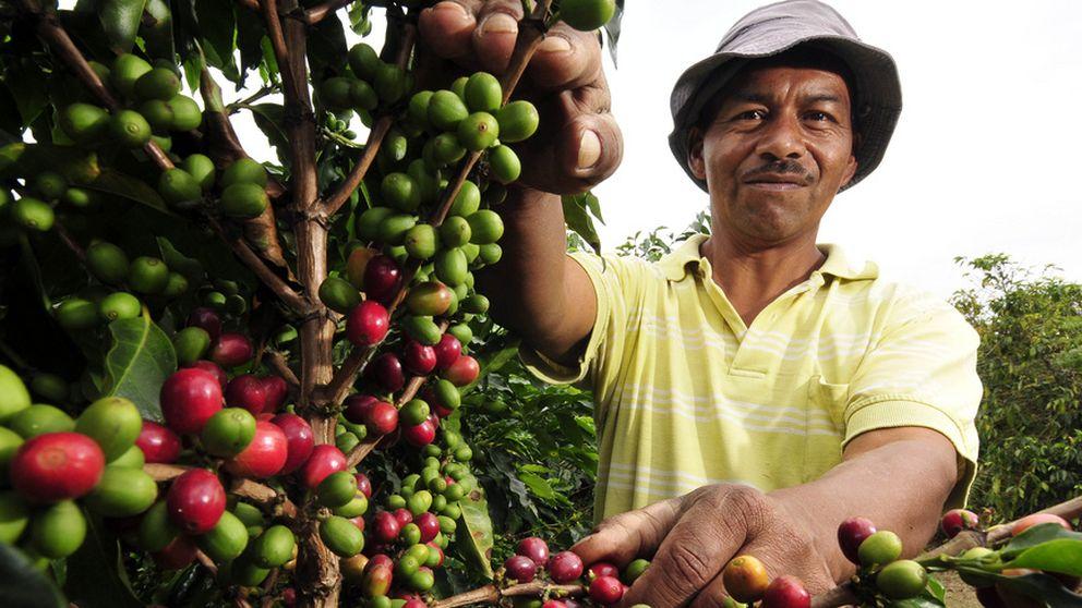 Un parque español para sacar todo el sabor al café de Colombia