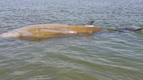 Liberada en aguas profundas una ballena que había quedado varada en el delta del Ebro