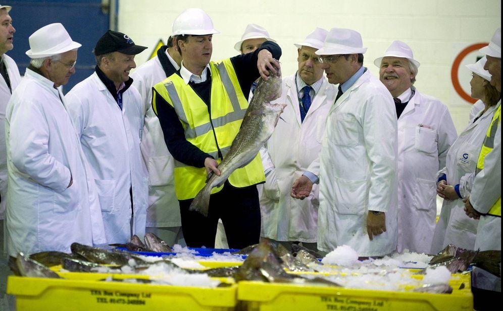 Foto: David Cameron, ex primer ministro de Reino Unido. (EFE)