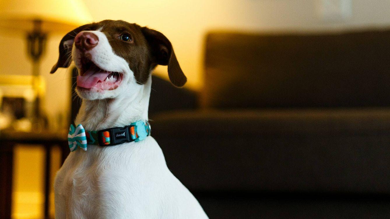 Un estudio sugiere que los perros son capaces de detectar las mentiras