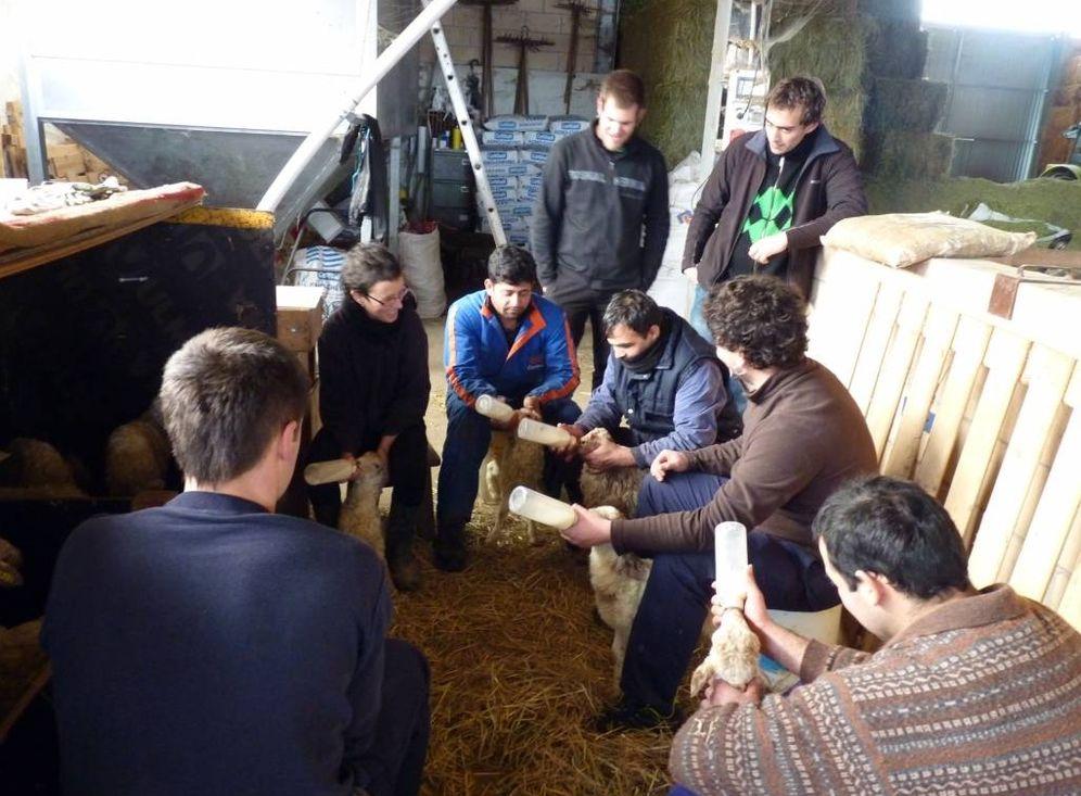 Foto: Alumnos de la Escuela de Pastores aprenden a alimentar a los corderos. (EC)