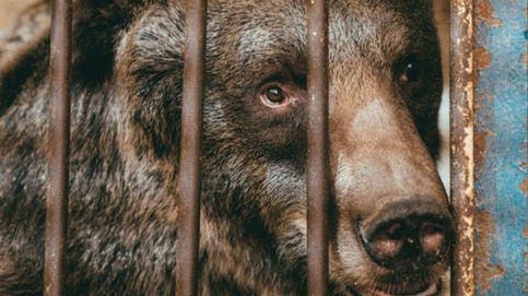 Rescatan a una osa que llevaba toda su vida encerrada en una jaula