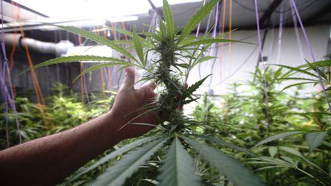 Primera empresa de marihuana que cotiza en el Nasdaq