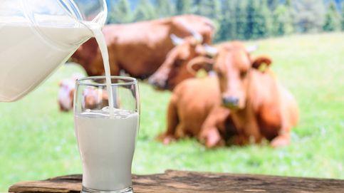 Los españoles consumen mucha menos leche que hace veinte años