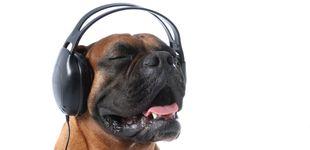 Post de Tu perro es melómano y no lo sabes: Spotify ya tiene listas de música para mascotas