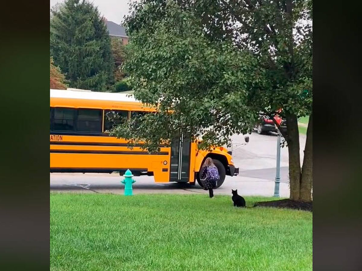 Foto: Craig acompaña cada día a su mejor amiga hasta que llega el autobús (TikTok)