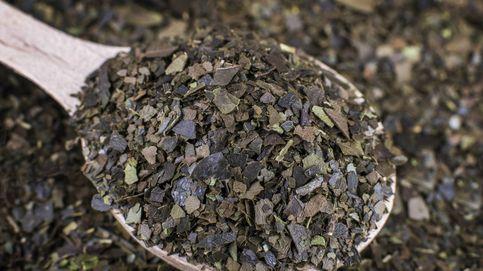 La guayusa: rebosa cafeína y antioxidantes por todos lados