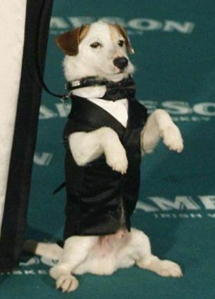 Cook, el perro actor más famoso de la pequeña pantalla (I.C.)