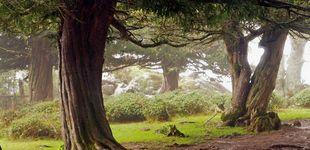 Post de Formas de huir del estrés: masajes en el bosque