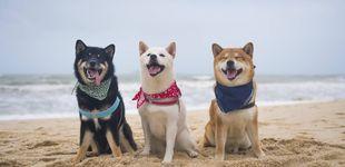 Post de Las mejores playas para perros que hay en Europa