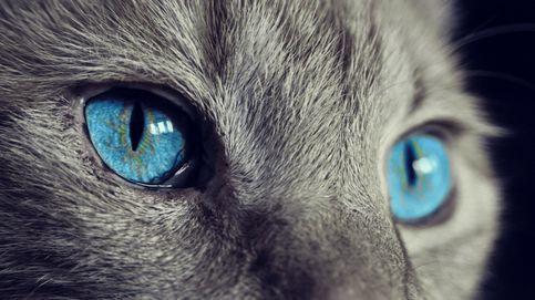 Una gata enloquece y encierra a su dueña dos días en la cocina sin dejarla salir