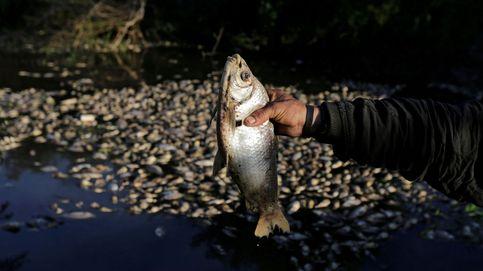 Aparecen miles de peces muertos en un río de Paraguay, y nadie sabe por qué